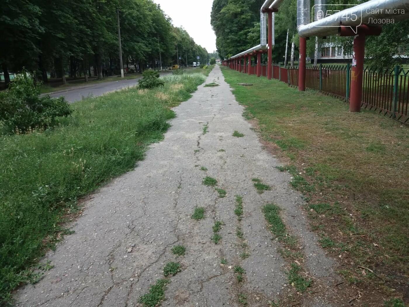 Лозовские улицы зарастают амброзией, фото-3