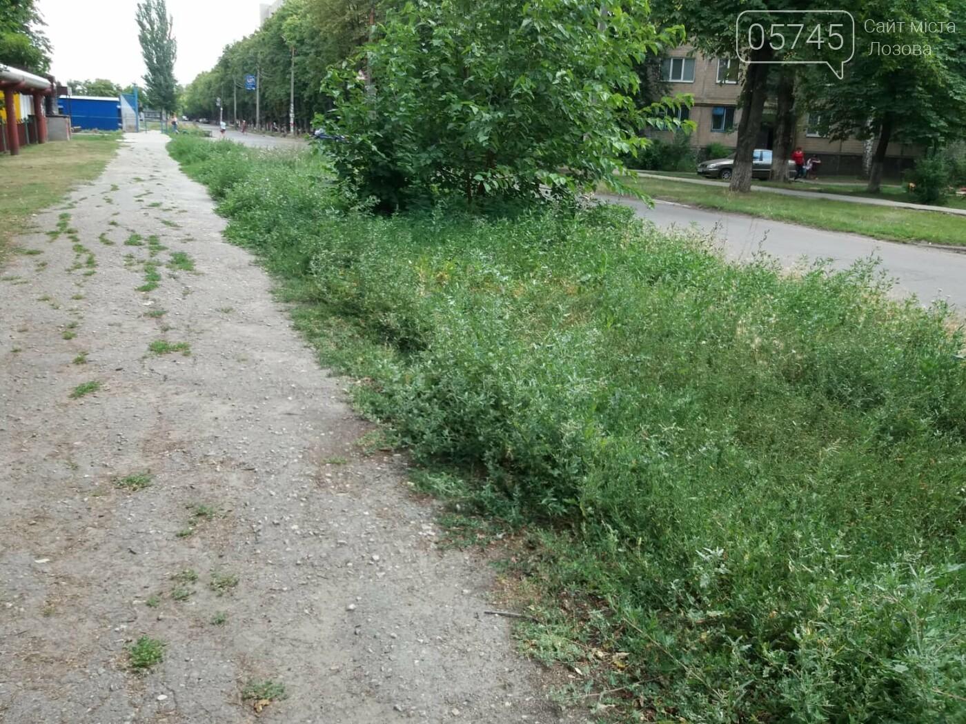 Лозовские улицы зарастают амброзией, фото-5