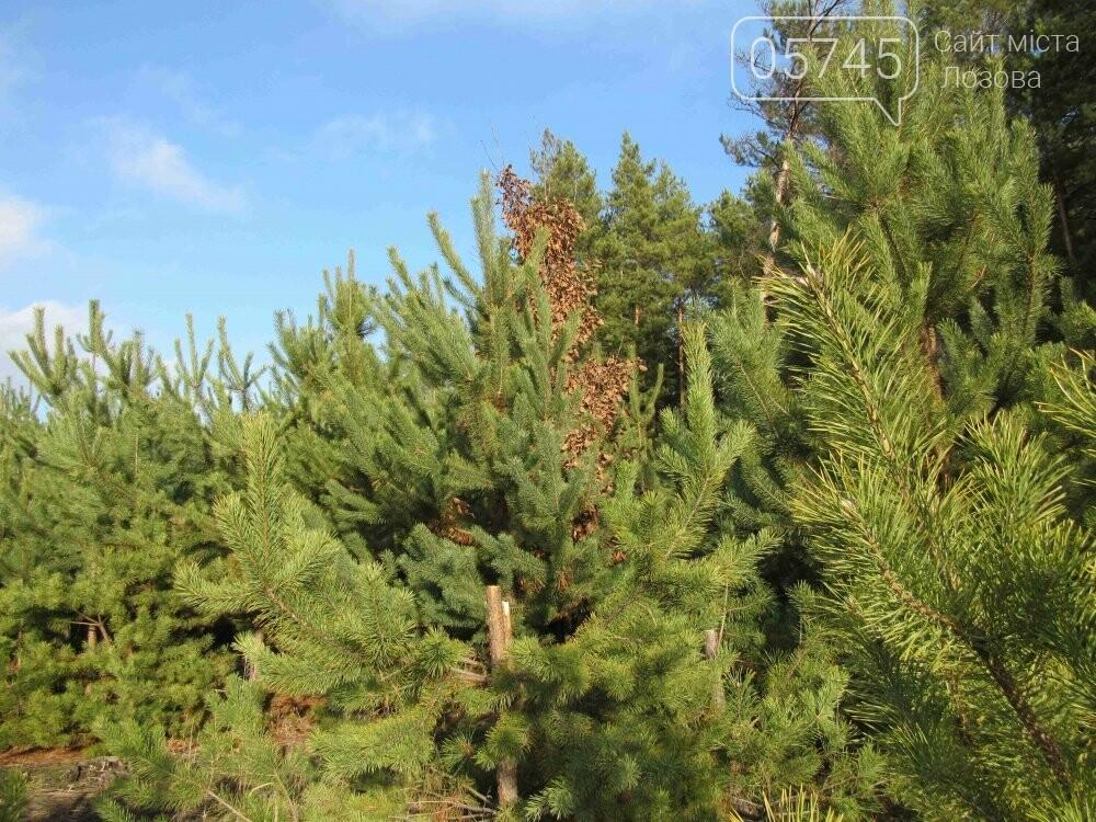 В лесу, неподалеку от Лозовой, зафиксировали нелегальную вырубку молодых елей (фото), фото-1