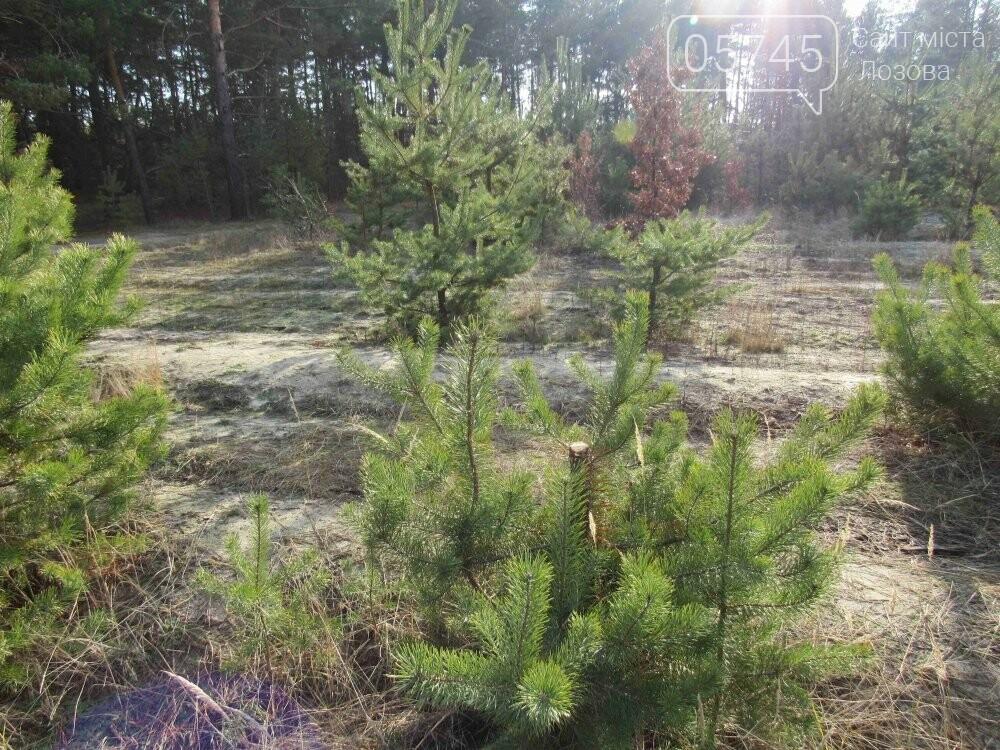 В лесу, неподалеку от Лозовой, зафиксировали нелегальную вырубку молодых елей (фото), фото-3