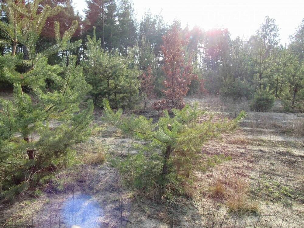 В лесу, неподалеку от Лозовой, зафиксировали нелегальную вырубку молодых елей (фото), фото-8