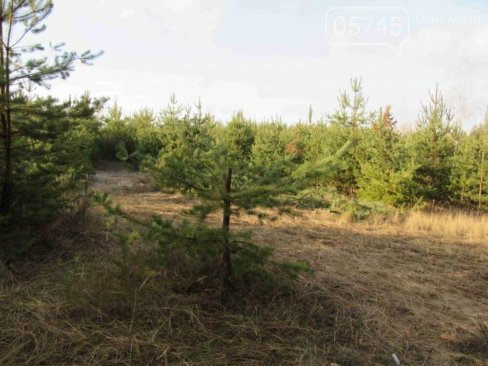 В лесу, неподалеку от Лозовой, зафиксировали нелегальную вырубку молодых елей (фото), фото-6
