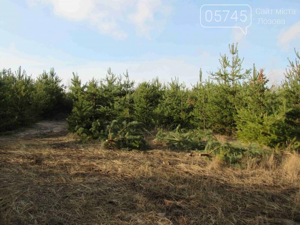 В лесу, неподалеку от Лозовой, зафиксировали нелегальную вырубку молодых елей (фото), фото-5