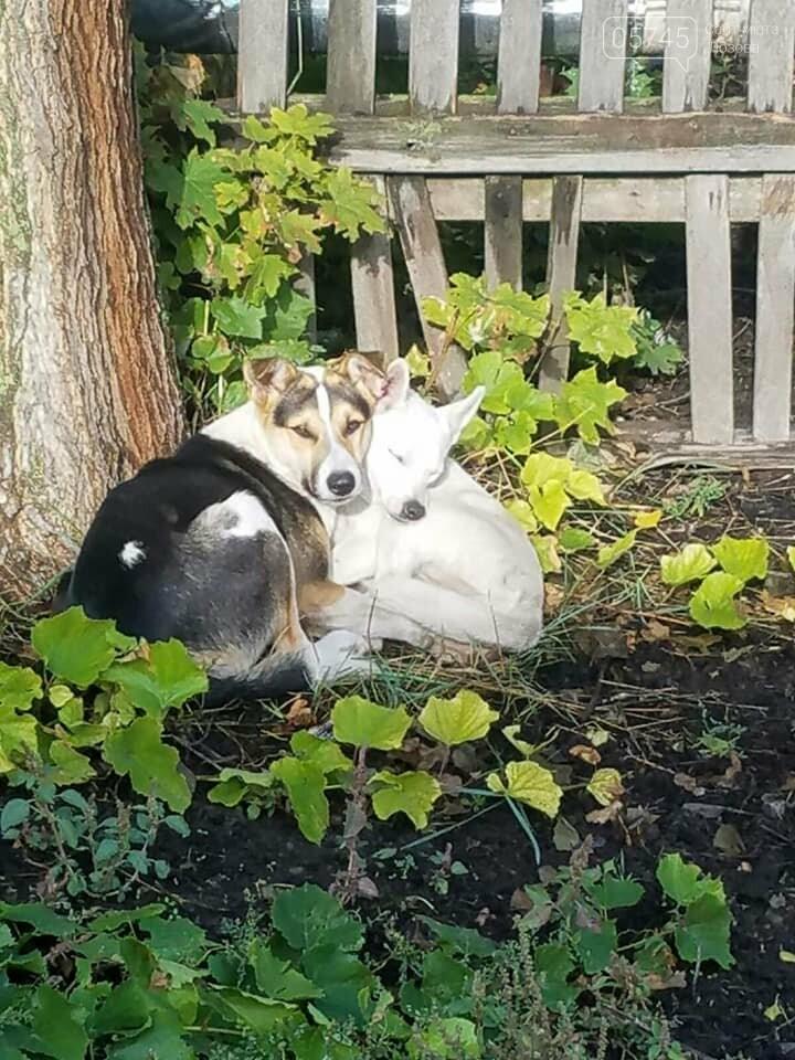 На Лозовщине неизвестные убили бродячих собак, фото-3
