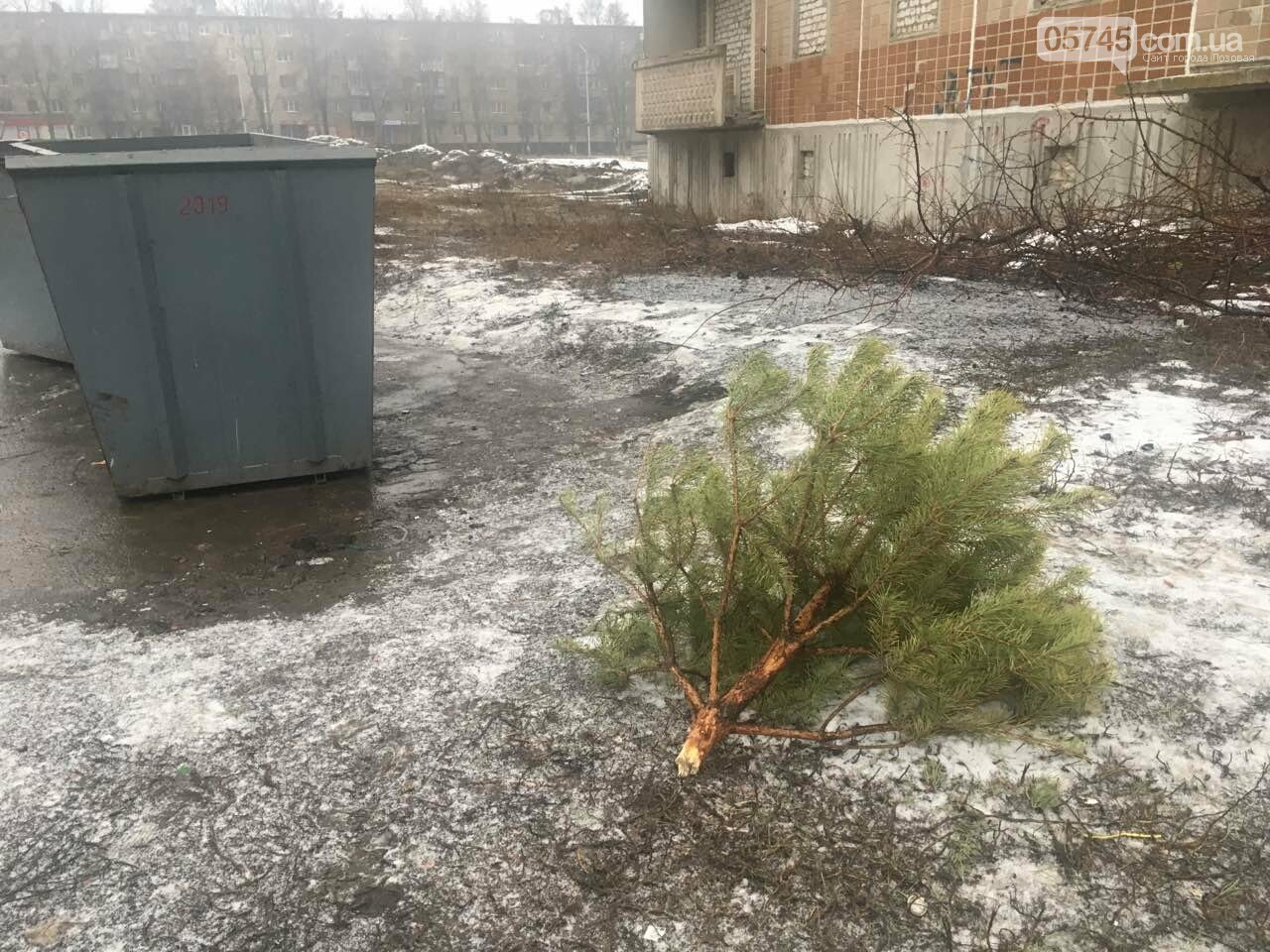 Что в Лозовой делают с выброшенными новогодними ёлками, фото-1