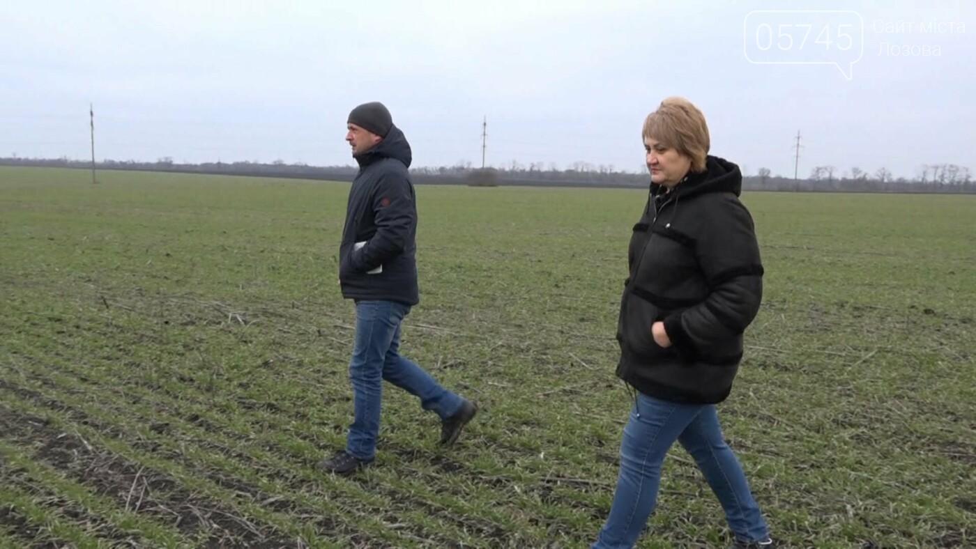 На полях Лозовщины активизировались мыши: есть ли угроза озимым посевам, фото-1