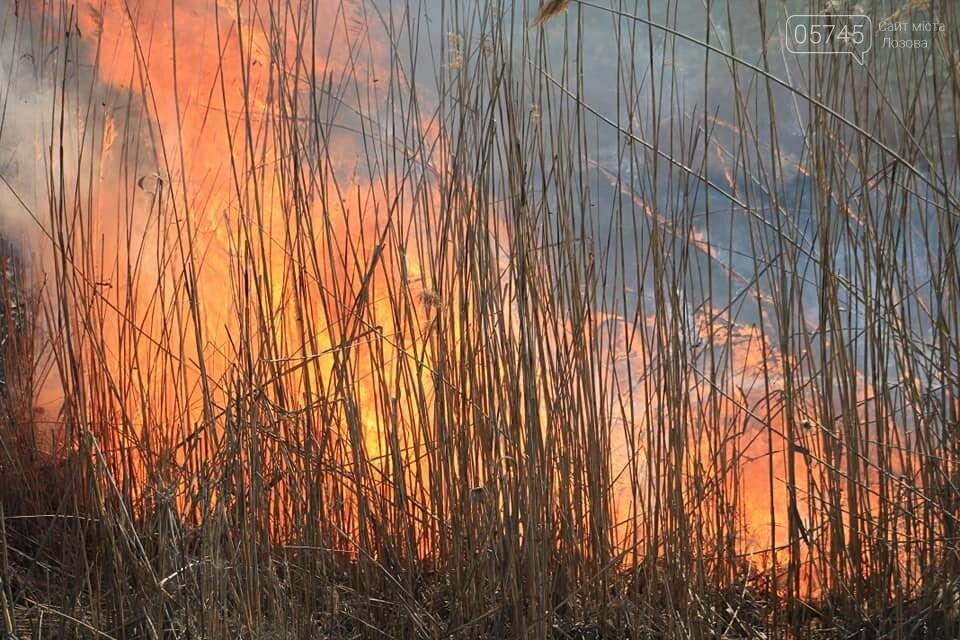 Лозовщина в огне: за неделю выгорело почти 11 гектаров сухостоя, фото-3