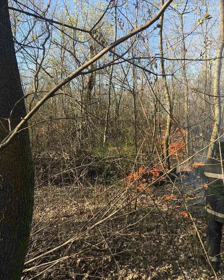 Лозовщина в огне: за неделю выгорело почти 11 гектаров сухостоя, фото-8