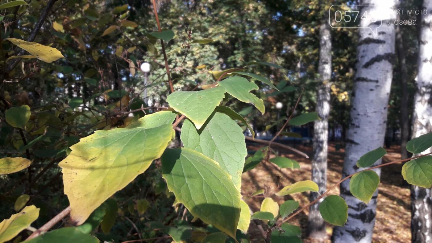 Осенние краски Лозовой (ФОТО), фото-2