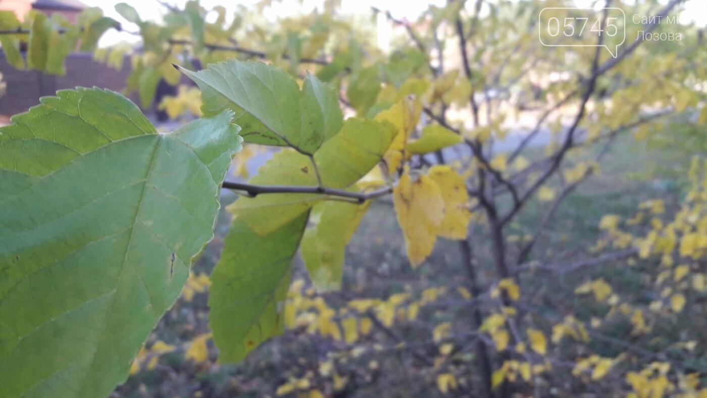 Осенние краски Лозовой (ФОТО), фото-22