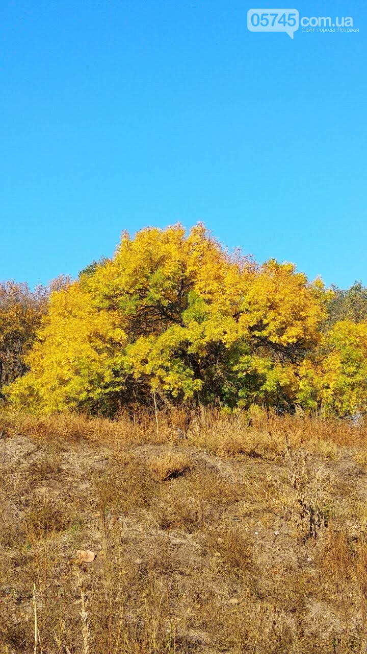Осенние краски Лозовой (ФОТО), фото-30