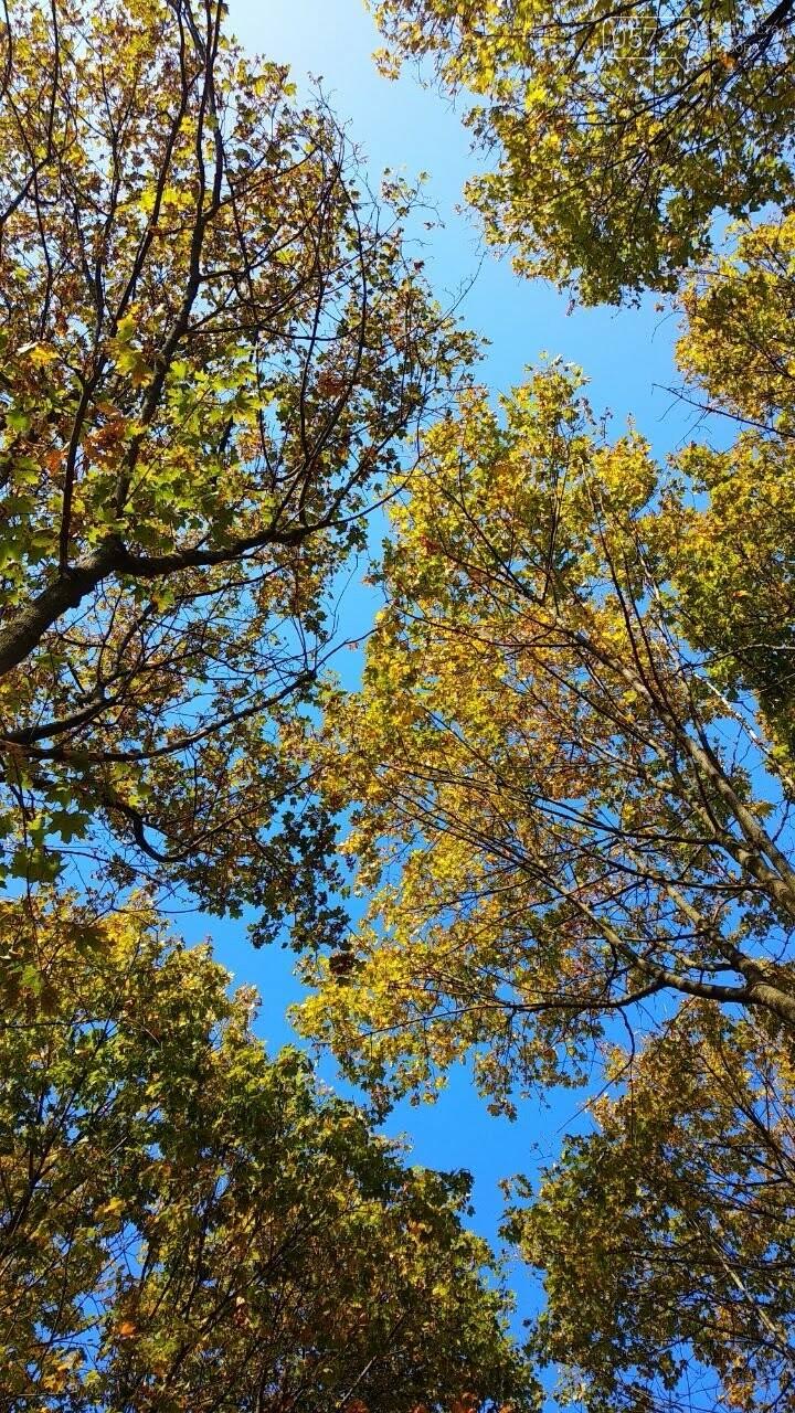 Осенние краски Лозовой (ФОТО), фото-31