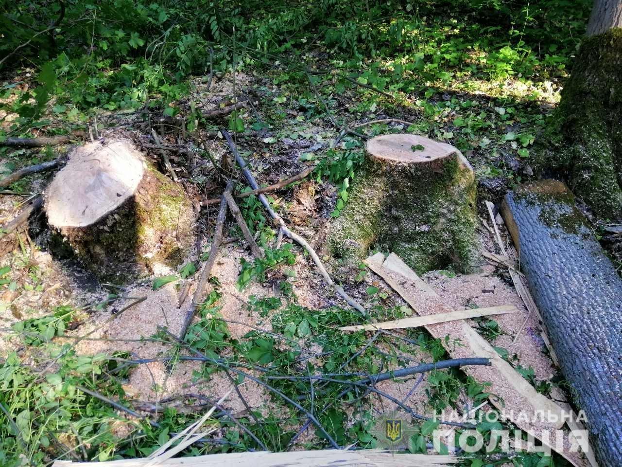 В Лозовой нашли человека, который незаконно вырубал деревья , фото-2