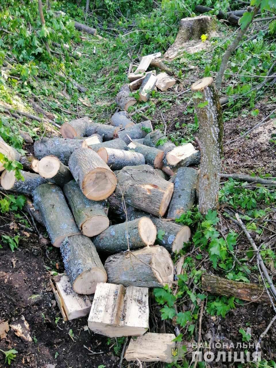 В Лозовой нашли человека, который незаконно вырубал деревья , фото-1
