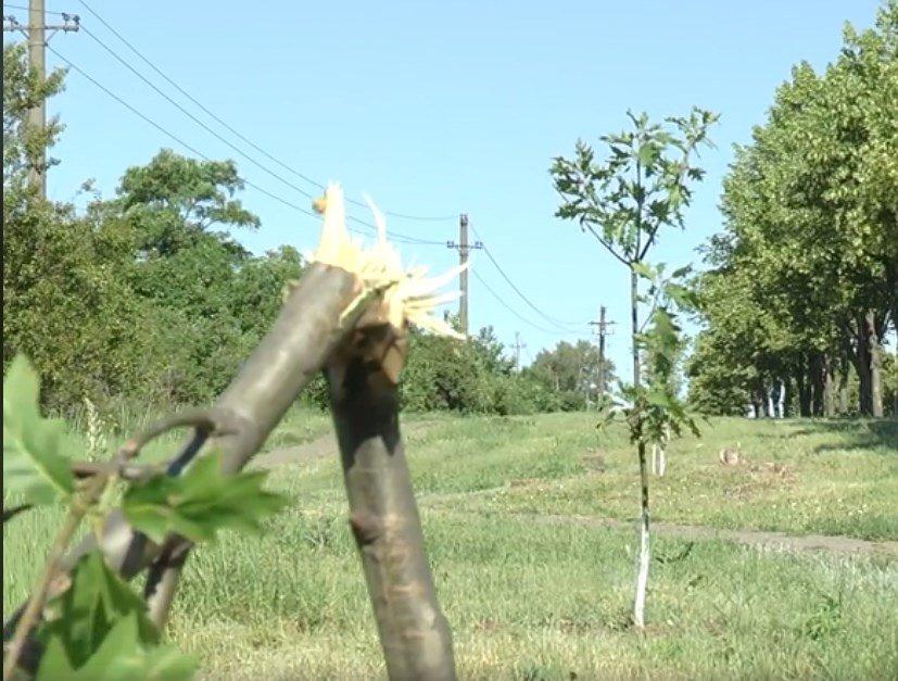 За поимку вандалов, сломавших красные дубы, обещают 15 000 грн. , фото-1