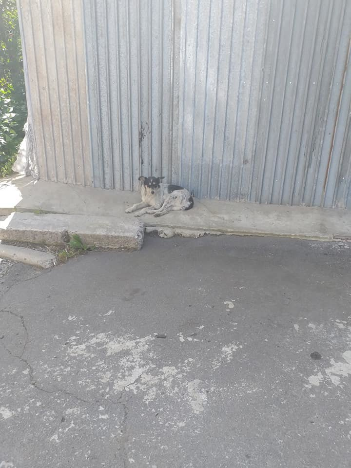 """В Лозовой зоозащитная организация """"Маємо право-2"""" провела массовую стерилизацию бездомных животных, фото-2"""