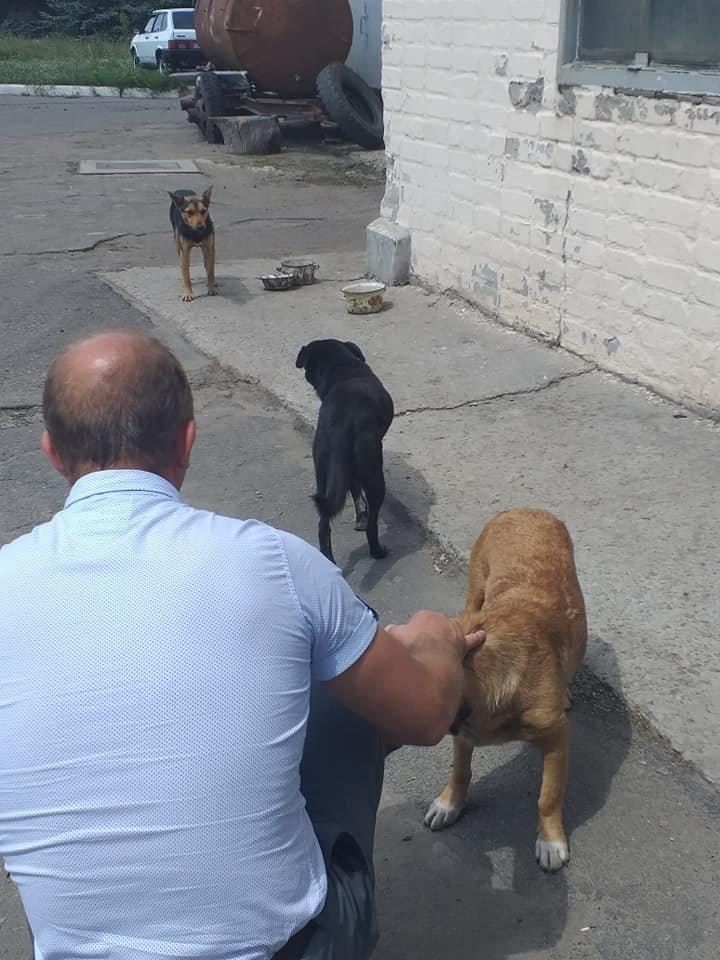 """В Лозовой зоозащитная организация """"Маємо право-2"""" провела массовую стерилизацию бездомных животных, фото-3"""