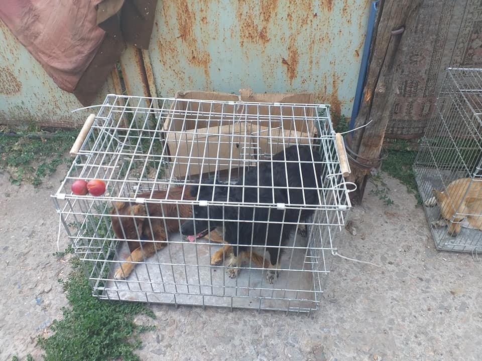 """В Лозовой зоозащитная организация """"Маємо право-2"""" провела массовую стерилизацию бездомных животных, фото-4"""