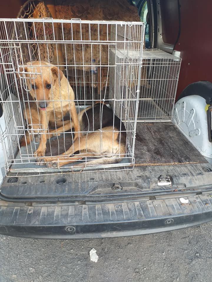 """В Лозовой зоозащитная организация """"Маємо право-2"""" провела массовую стерилизацию бездомных животных, фото-5"""