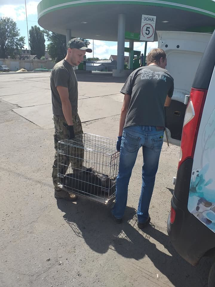 """В Лозовой зоозащитная организация """"Маємо право-2"""" провела массовую стерилизацию бездомных животных, фото-10"""