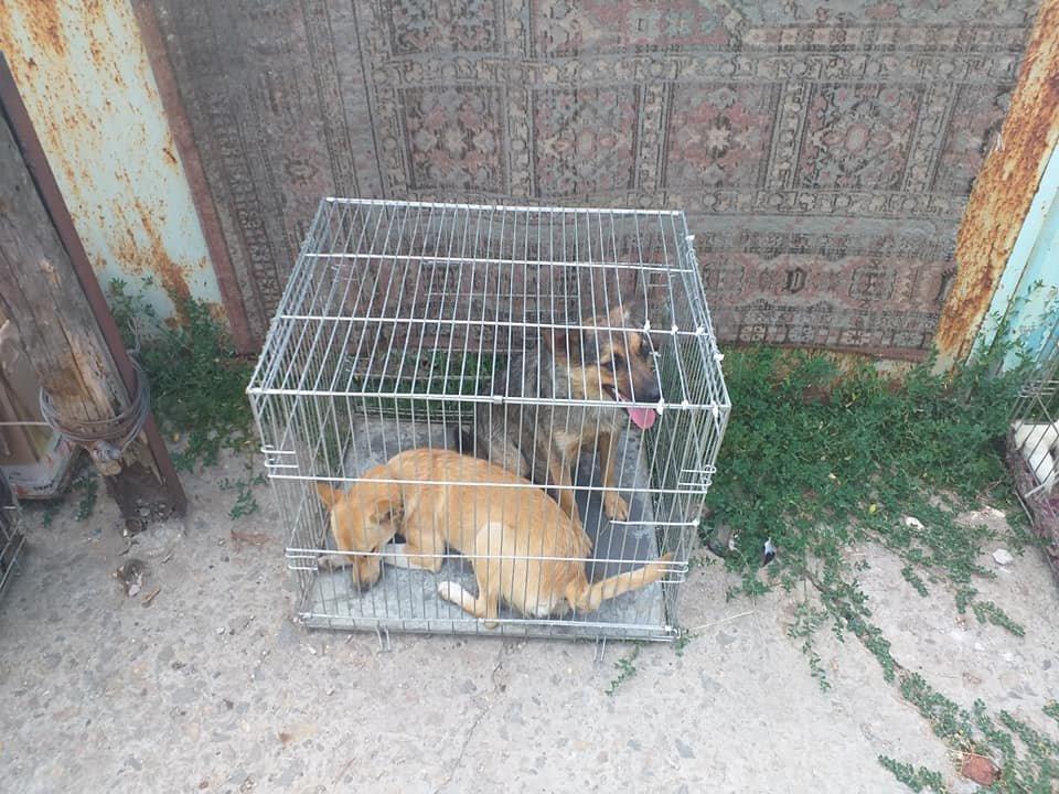 """В Лозовой зоозащитная организация """"Маємо право-2"""" провела массовую стерилизацию бездомных животных, фото-1"""