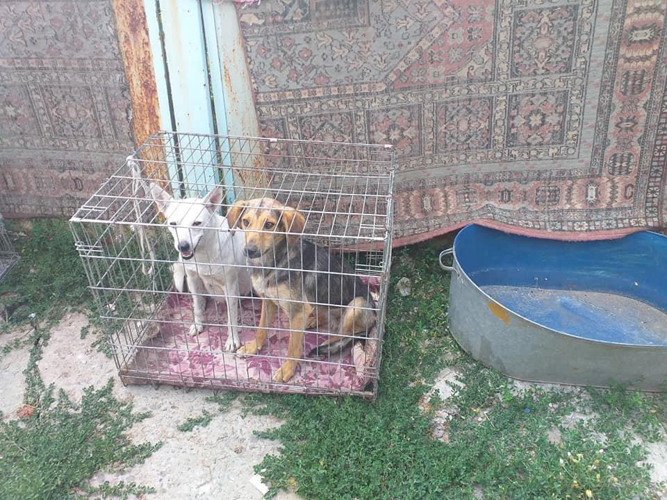 """В Лозовой зоозащитная организация """"Маємо право-2"""" провела массовую стерилизацию бездомных животных, фото-6"""