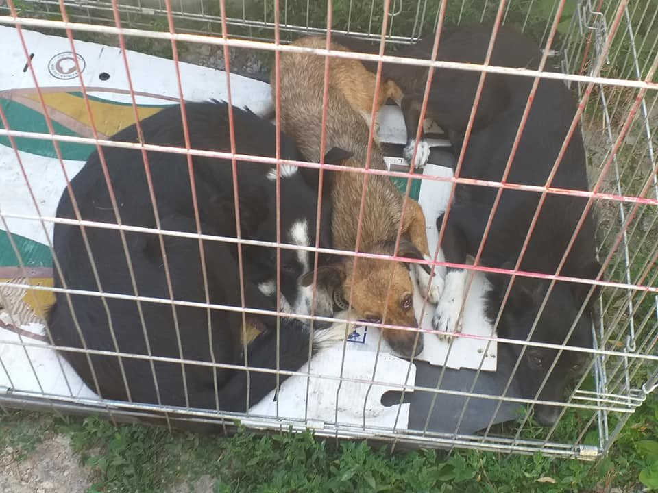 """В Лозовой зоозащитная организация """"Маємо право-2"""" провела массовую стерилизацию бездомных животных, фото-8"""