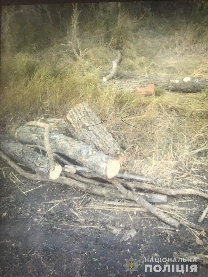 Два случая за один день. В Лозовой и Близнецах незаконно вырубали деревья, фото-1