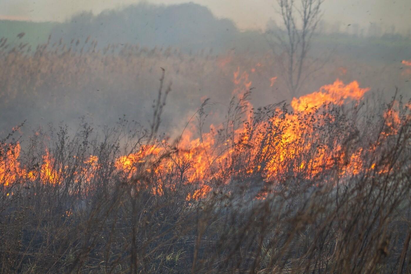 В Лозовой и селе Весёлом выгорела сухая растительность, фото-6