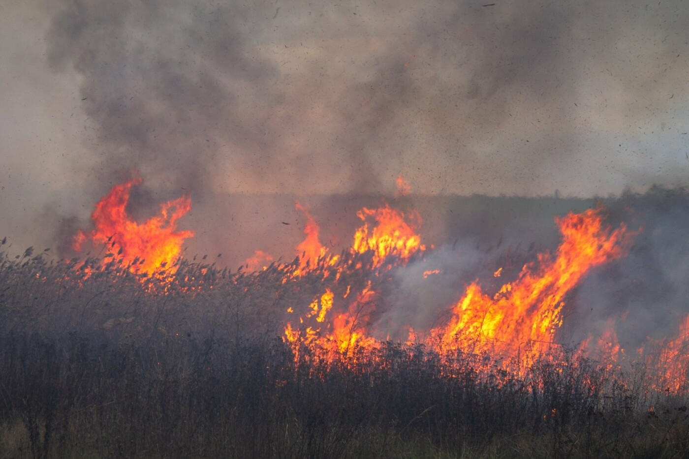 В Лозовой и селе Весёлом выгорела сухая растительность, фото-5