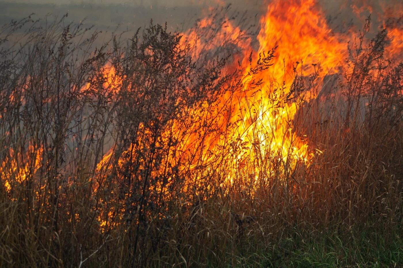 В Лозовой и селе Весёлом выгорела сухая растительность, фото-4