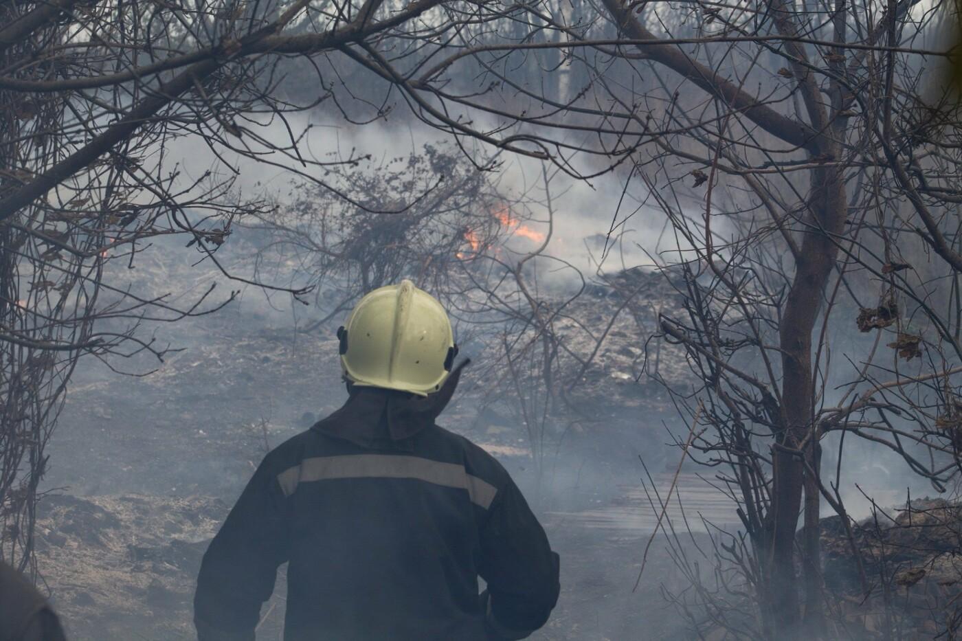 В Лозовой и селе Весёлом выгорела сухая растительность, фото-2
