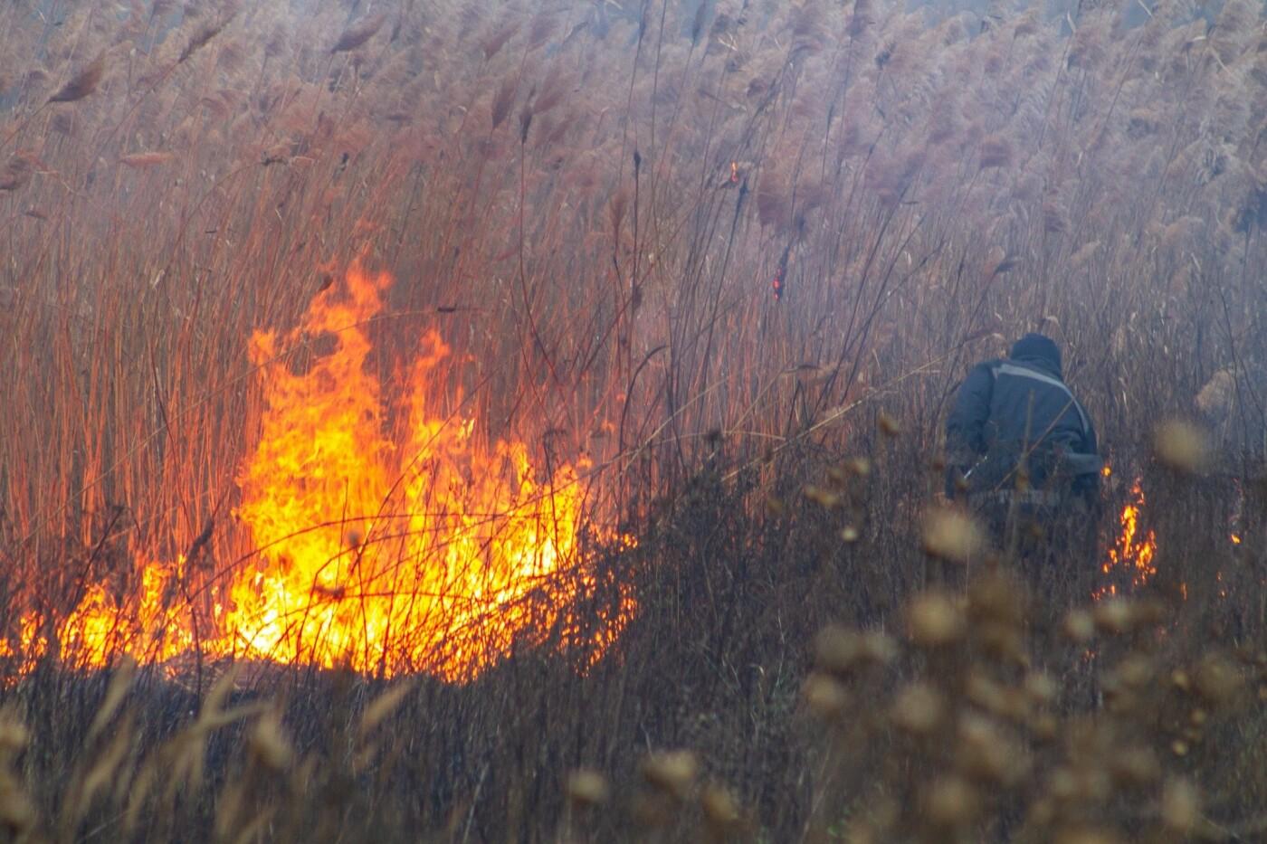 В Лозовой и селе Весёлом выгорела сухая растительность, фото-3