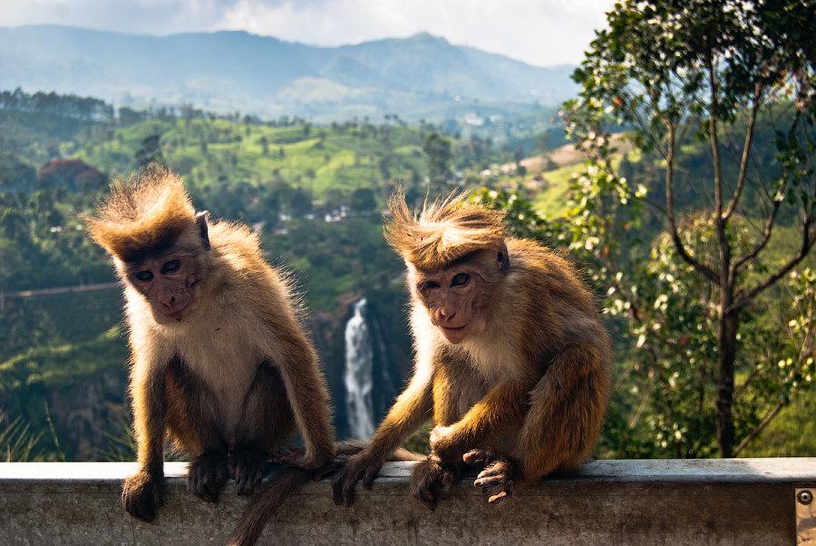 Турагентство «Vиктория» приглашает лозовчан отдохнуть в незабываемой Шри-Ланке и посетить Рождественскую сказку в Яремче, фото-4