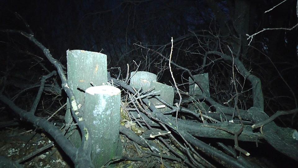 На Лозовщине возле села Черниговское незаконно спилили лесополосу (Фото, видео), фото-1