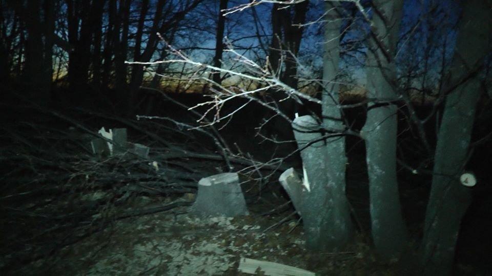 На Лозовщине возле села Черниговское незаконно спилили лесополосу (Фото, видео), фото-2