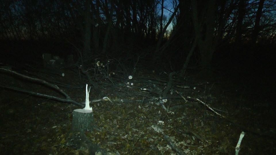 На Лозовщине возле села Черниговское незаконно спилили лесополосу (Фото, видео), фото-3