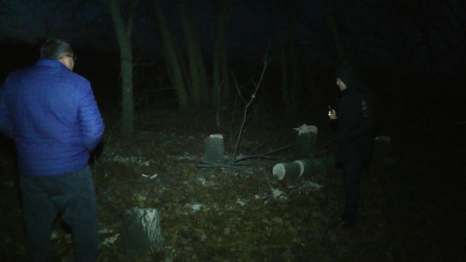 На Лозовщине возле села Черниговское незаконно спилили лесополосу (Фото, видео), фото-5