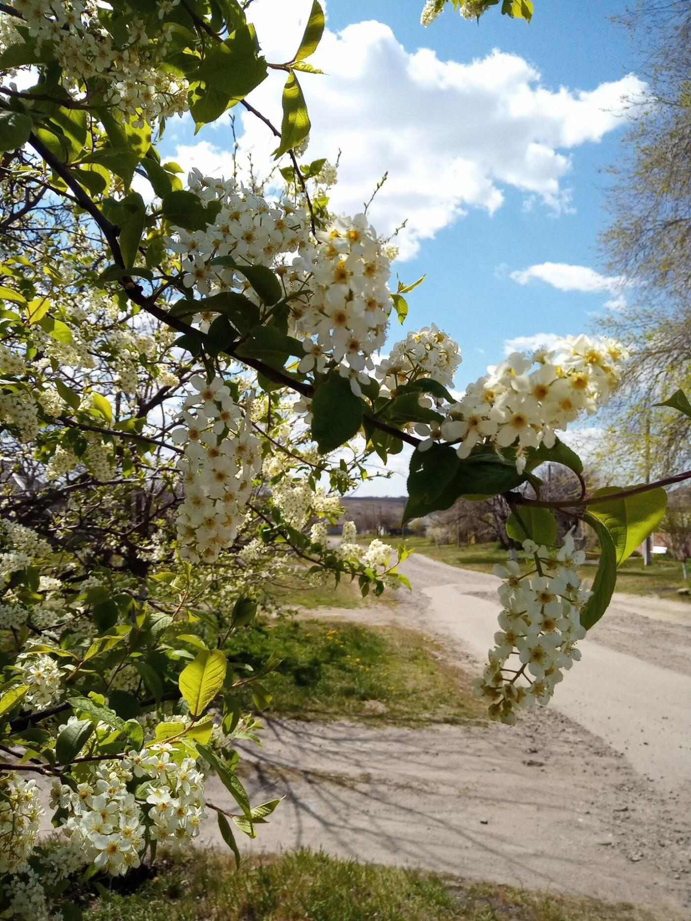 Для жителей Лозовщины планируют создать брошюру о живописных местах (ФОТО), фото-4