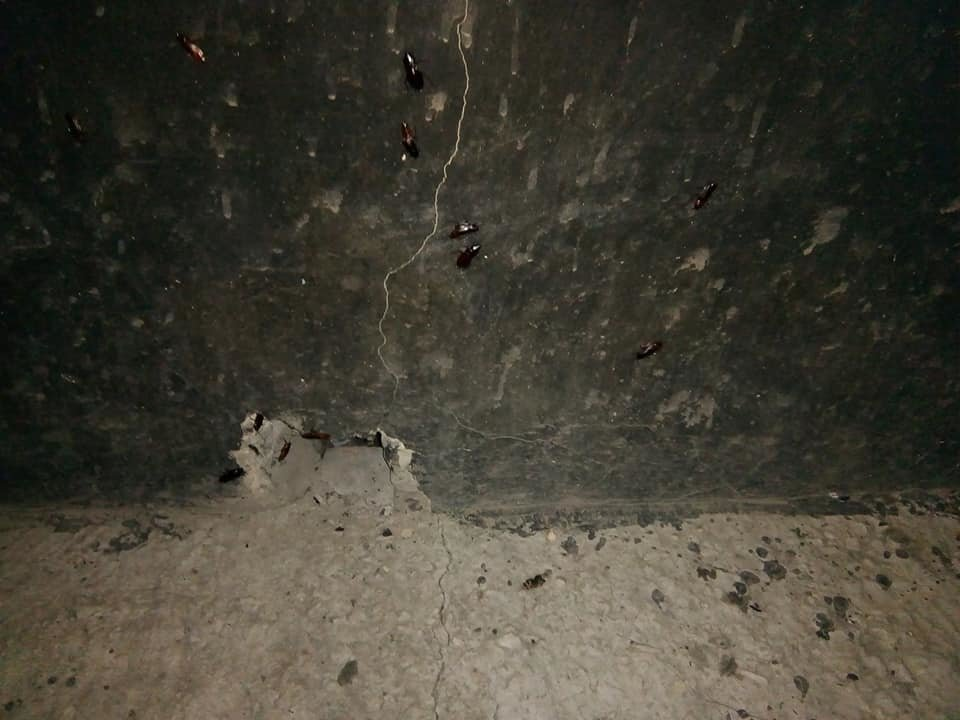 Набег на многоэтажки: лозовчане жалуются на нашествие тараканов, фото-2
