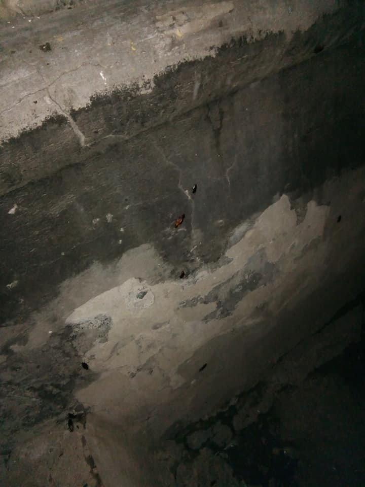 Набег на многоэтажки: лозовчане жалуются на нашествие тараканов, фото-3