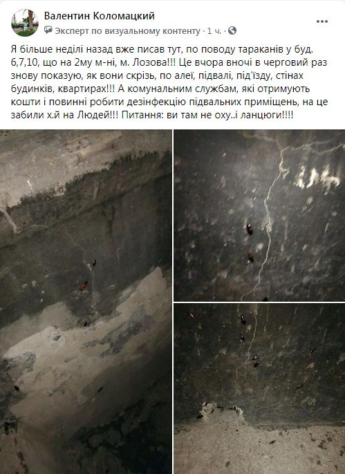 Набег на многоэтажки: лозовчане жалуются на нашествие тараканов, фото-1