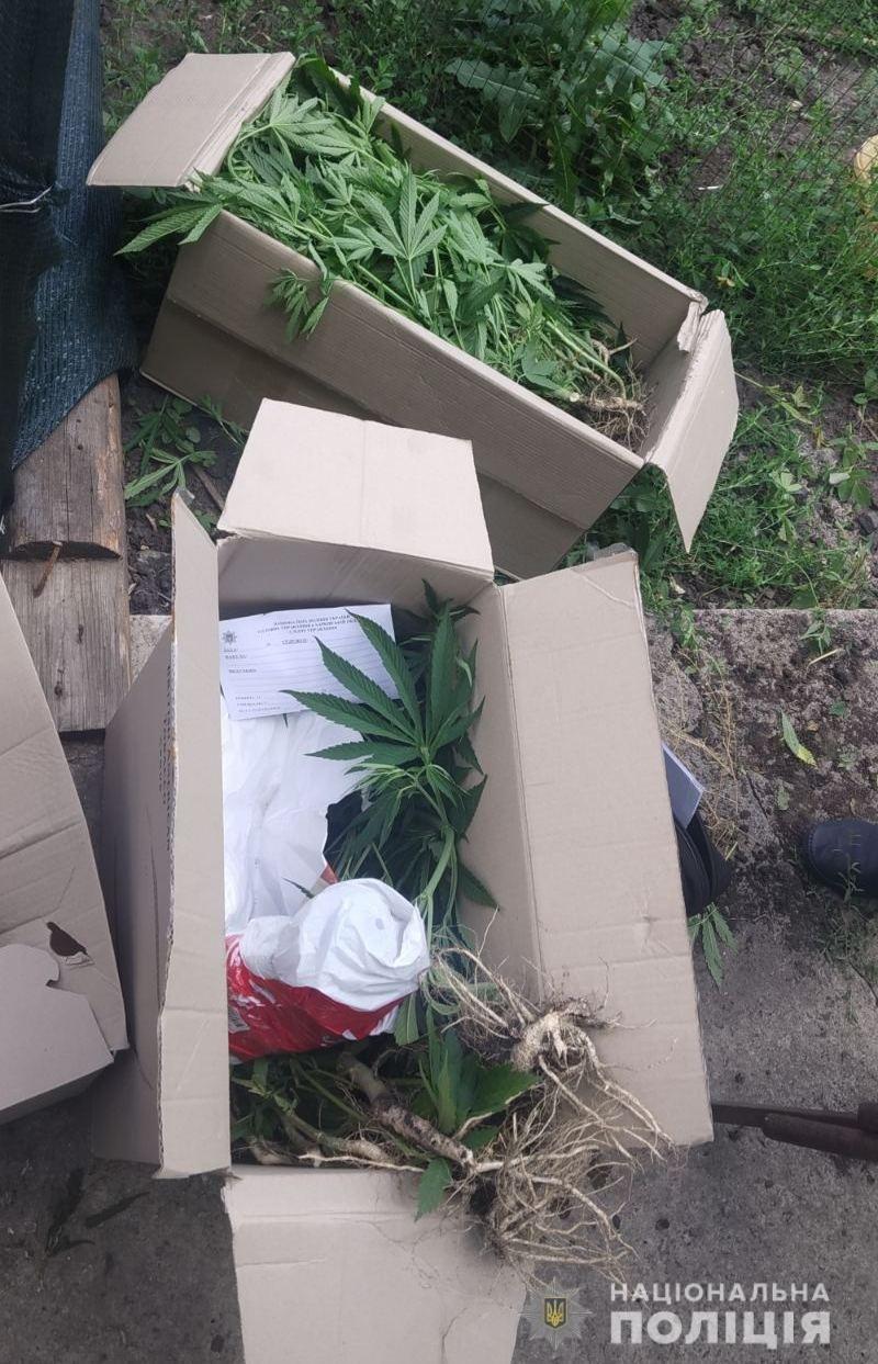 Обыскали дома: у жителей Лозовой и Краснопавловки нашли каннабис, фото-1