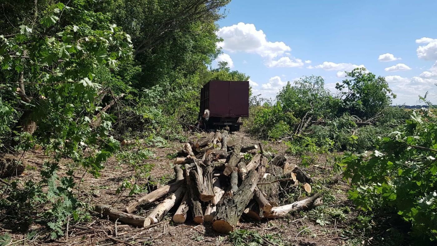 Одни сбежали, другие засыпали пни: на Лозовщине обнаружили пильщиков посадок, фото-8