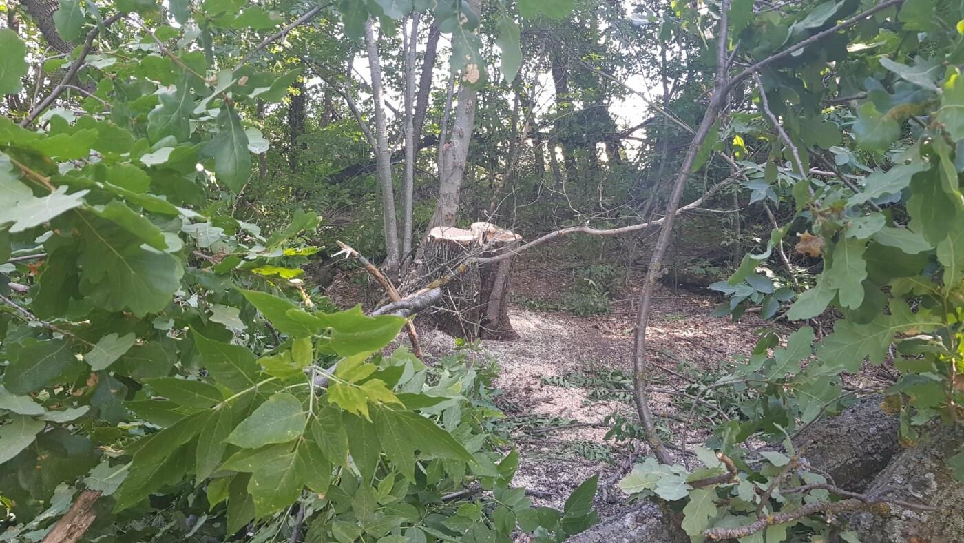 Одни сбежали, другие засыпали пни: на Лозовщине обнаружили пильщиков посадок, фото-4