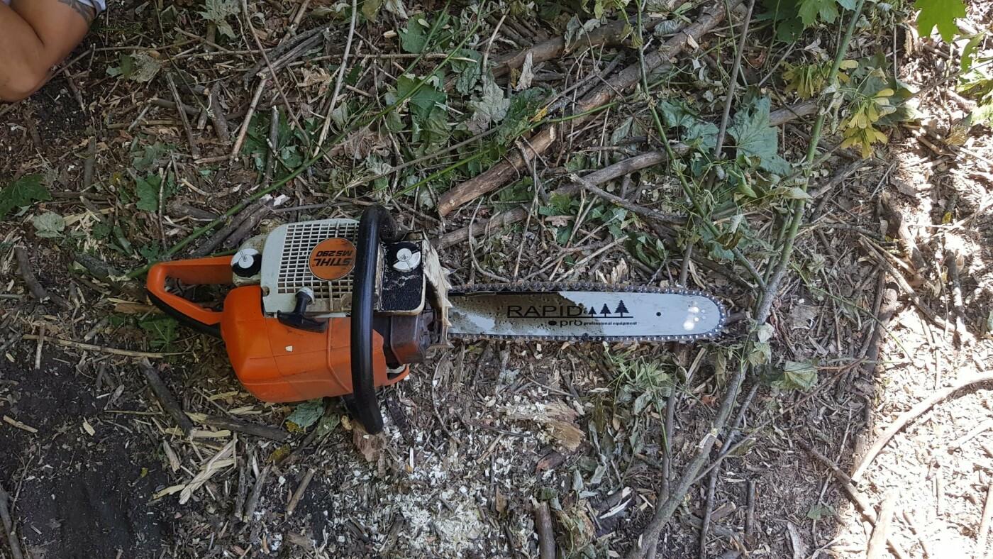 Одни сбежали, другие засыпали пни: на Лозовщине обнаружили пильщиков посадок, фото-6