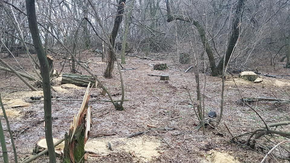 Убытки на 70 тысяч: на Лозовщине поймали «чёрных лесорубов», фото-1