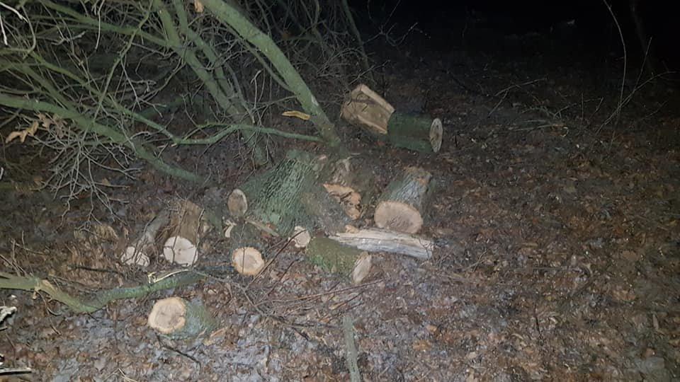 Убытки на 70 тысяч: на Лозовщине поймали «чёрных лесорубов», фото-6