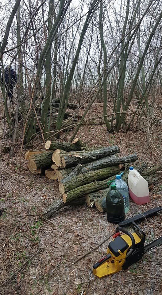 Убытки на 70 тысяч: на Лозовщине поймали «чёрных лесорубов», фото-4
