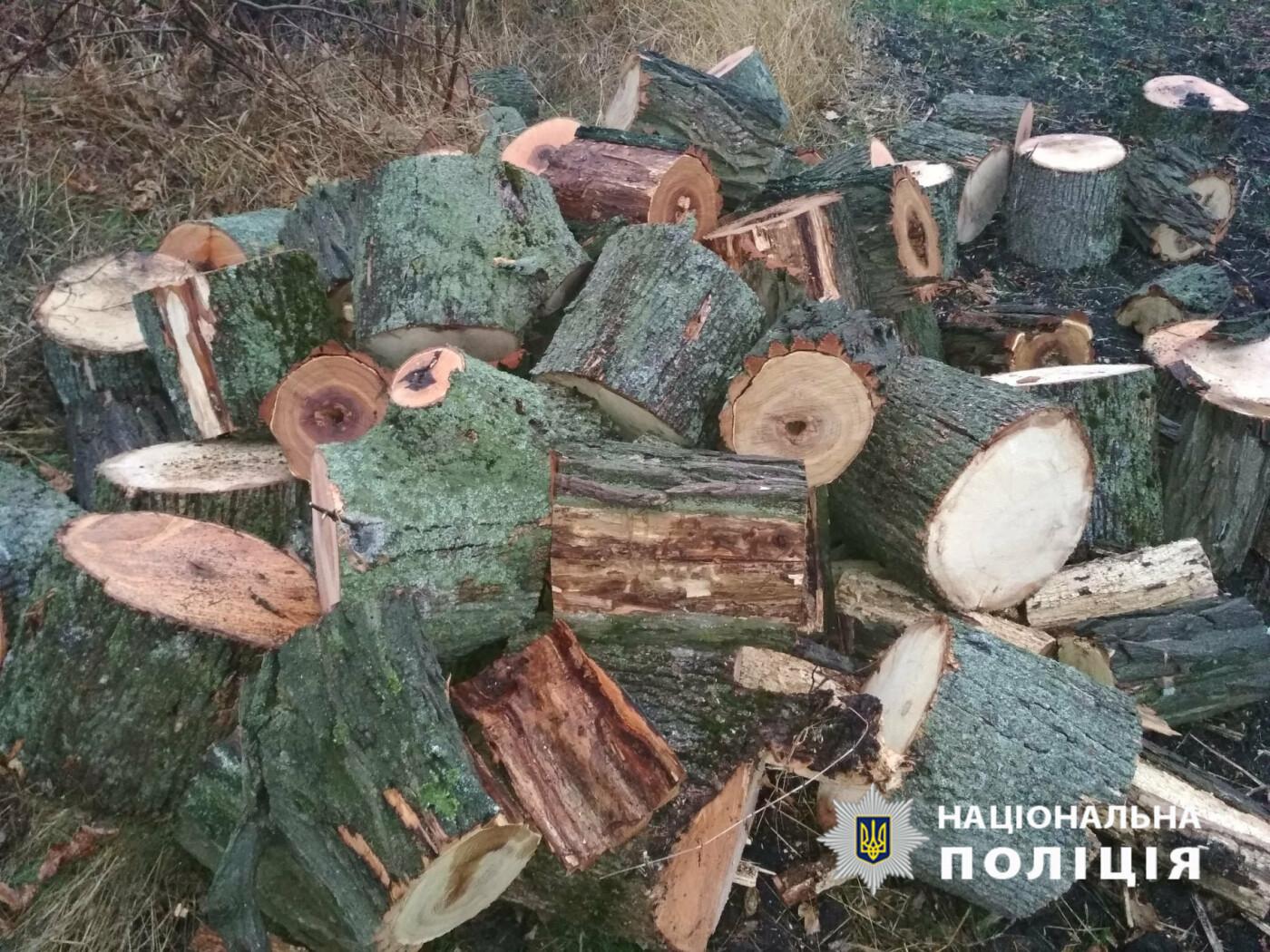 Поспилювали дерев на 109 тисяч гривень: на Лозівщині чоловіки незаконно рубали ліс, фото-2